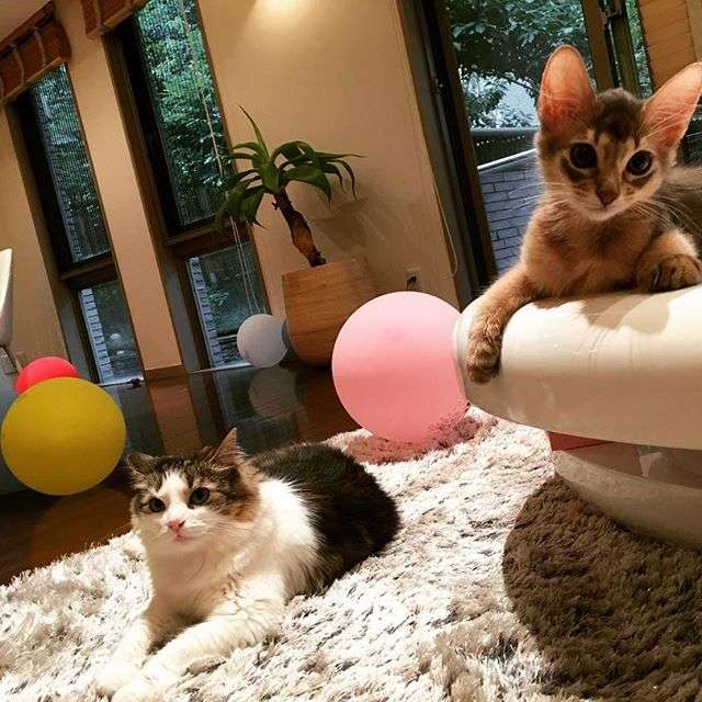 ダレノガレ明美、猫の里親探し支援アカウント開設へ 以前から愛護活動
