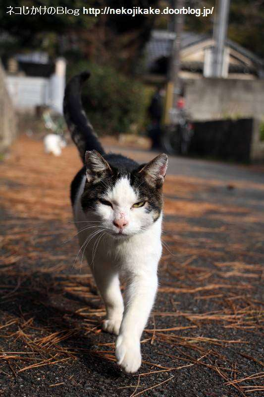 目つきの悪い猫を貼るトピ