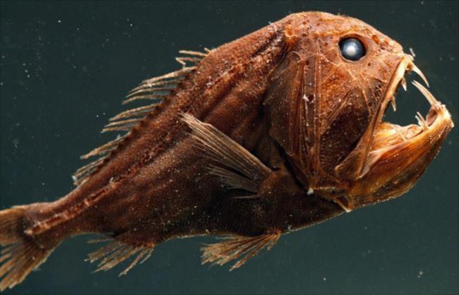 【閲覧注意】海中の怖い生物の話をしよう