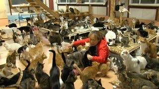 「猫ブームは困る」1000匹以上の猫を保護するNPOの女性、行動力と説得力がネットで称賛