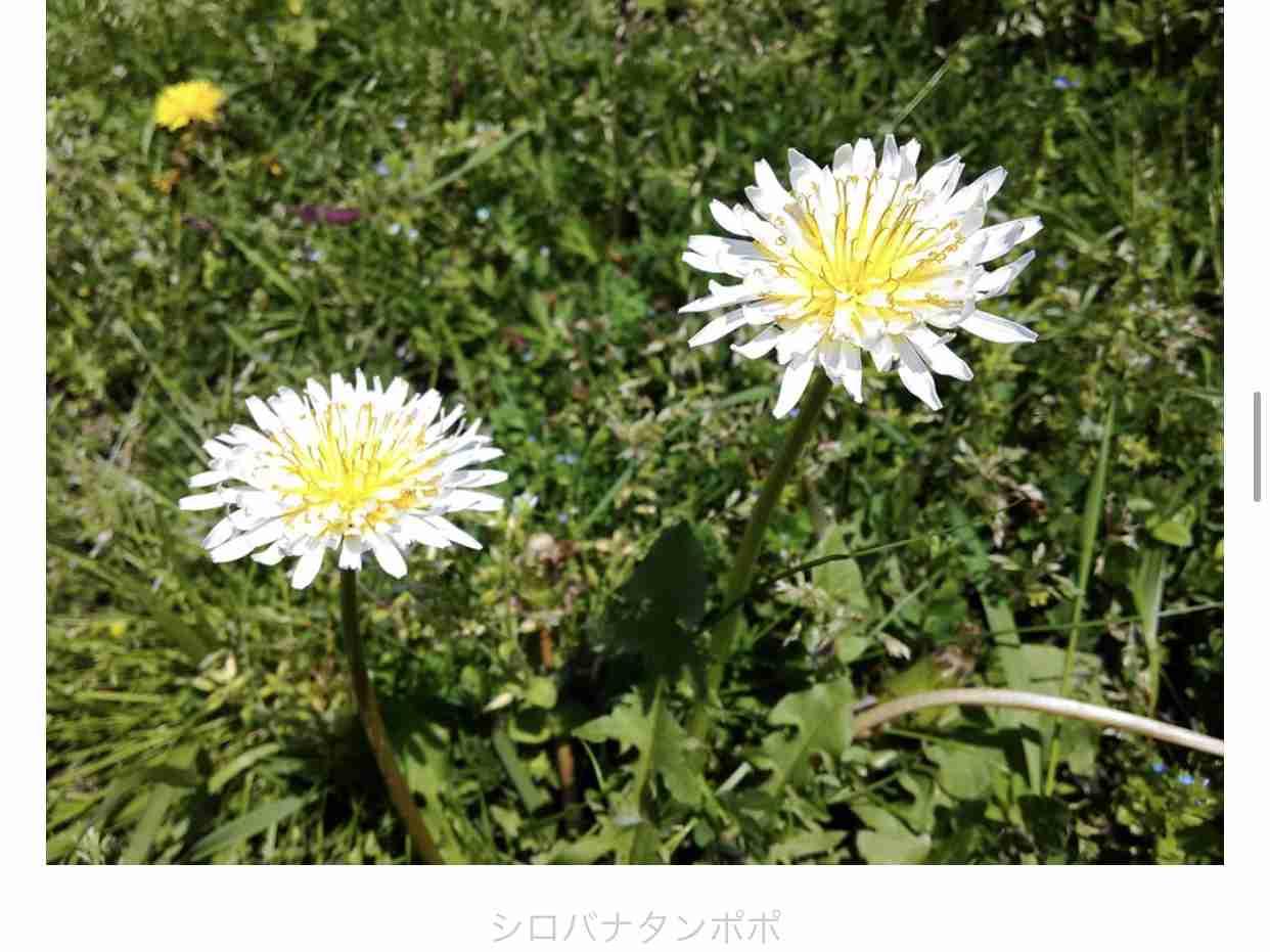 雑草のお花が好き(^^)