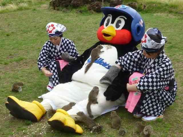 つば九郎、NEWSファンに「報復チャンカパーナ」 「焼き鳥」騒動の翌日、ノリノリでダンス披露