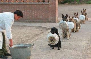 犬のしつけ教室に通われた方!