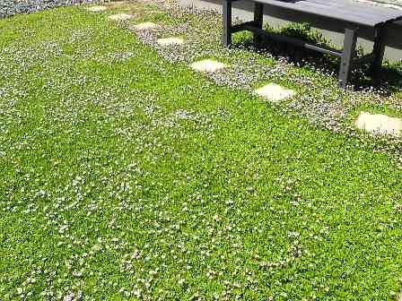 庭の雑草対策。