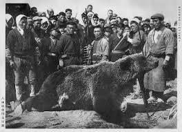 ヒグマが106年ぶり上陸か 利尻島で警戒続く