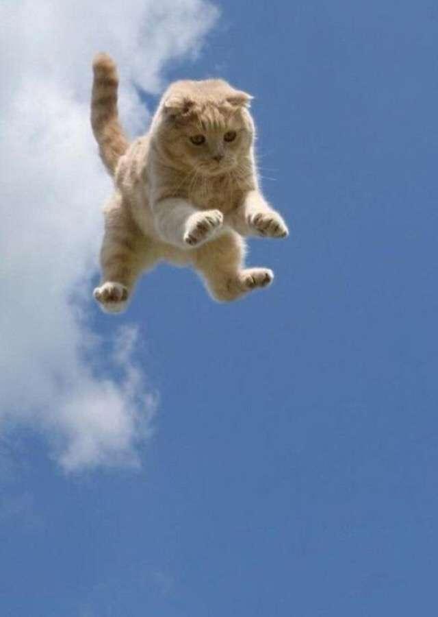 飛ぶ・舞う・踊る・歌う動物達