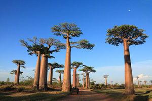 色々な「巨木」の画像を貼るトピ♪