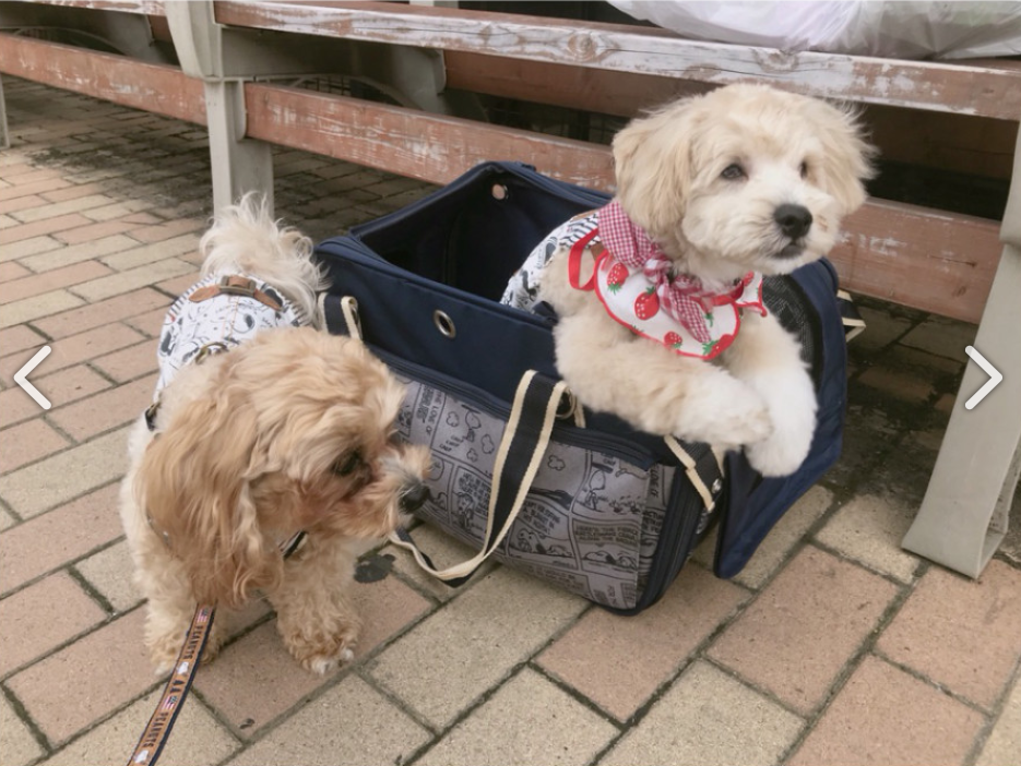 辻希美、「犬が可愛そう」愛犬らの扱いが酷くて批判殺到