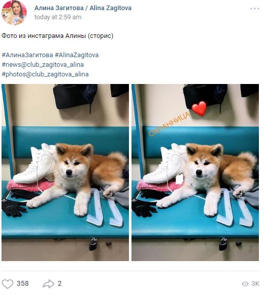 秋田犬「マサル」、先住猫「イリースカ」にほえる…ザギトワ選手宅の犬猫同居を心配する声も