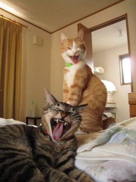 動物があくびしている画像