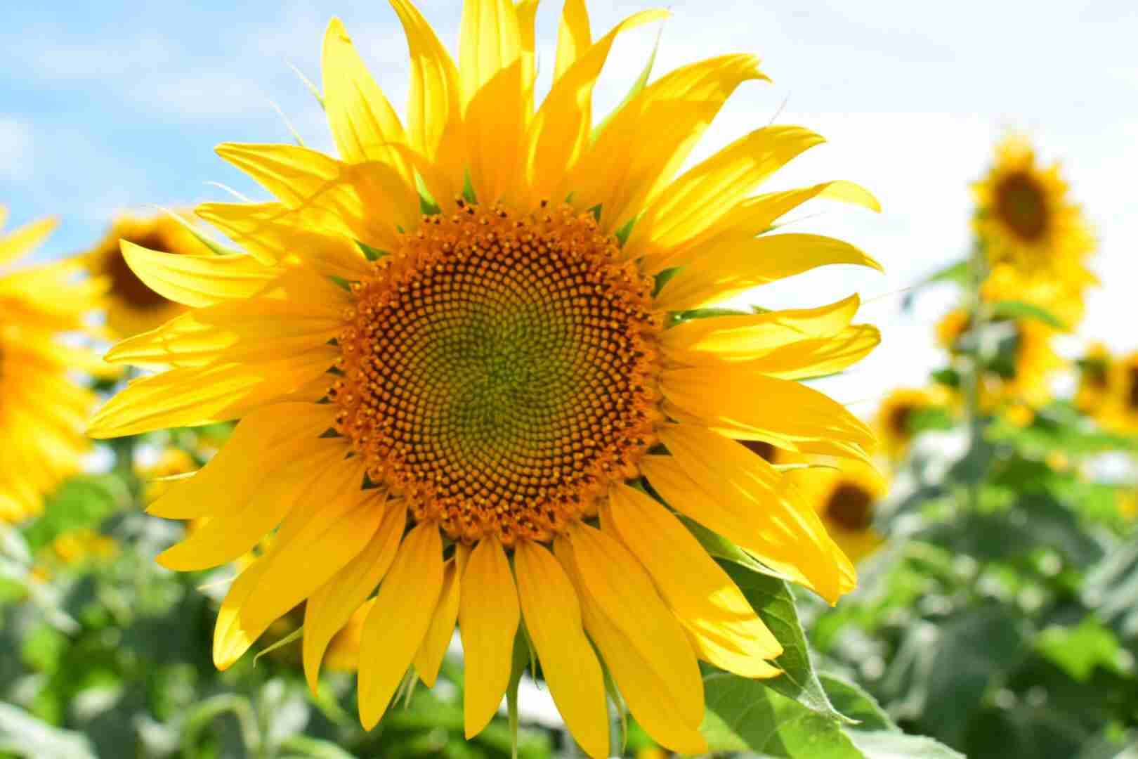 【画像】夏の花