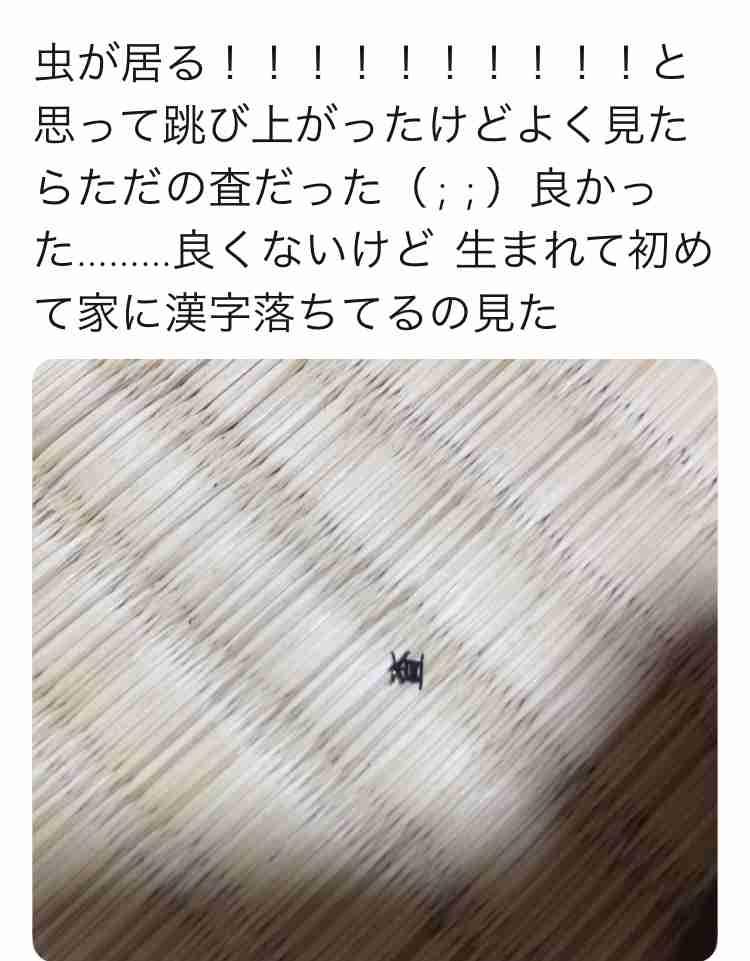 【閲覧注意?】家の中に出た生き物