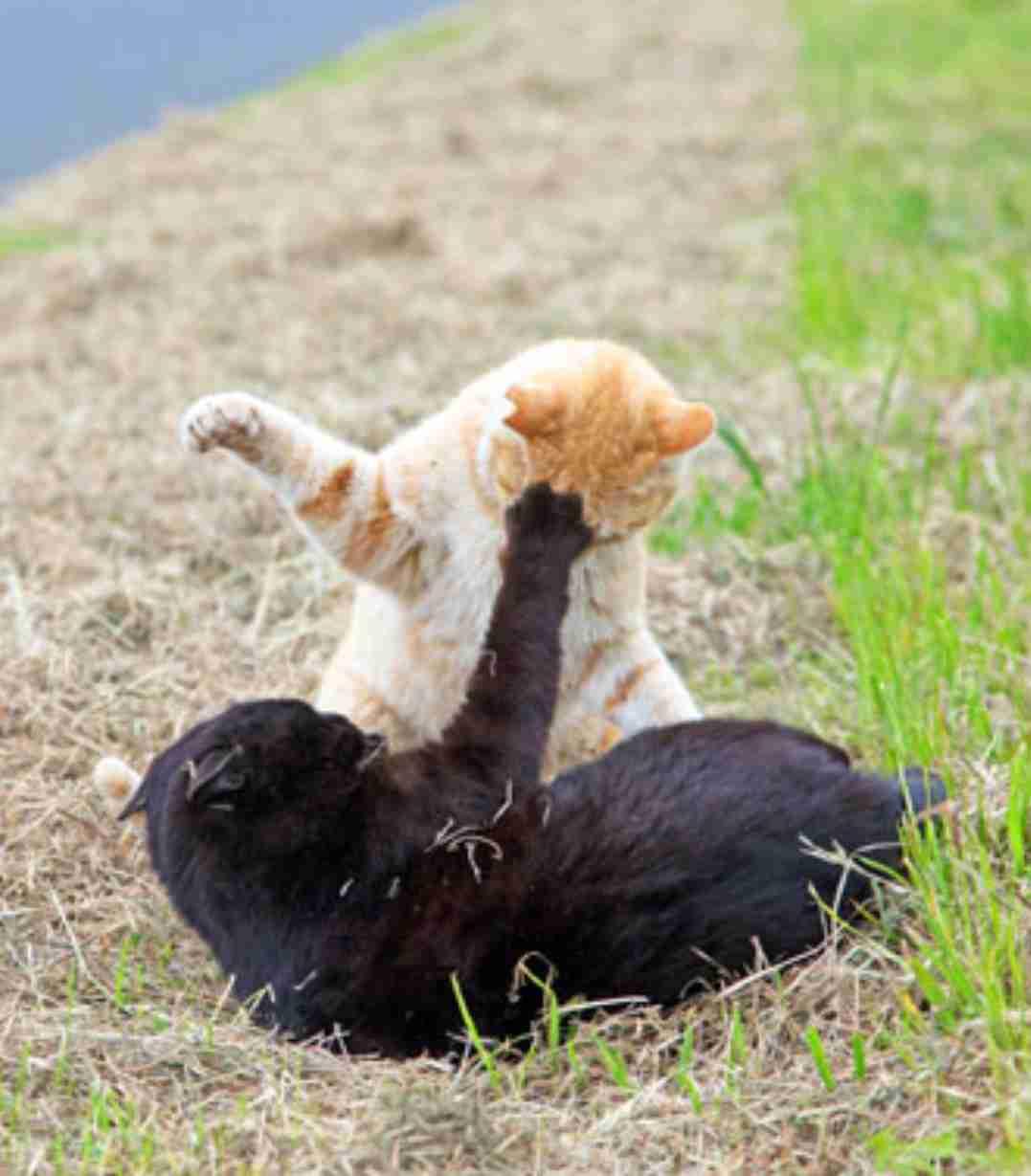 猫画像でボケるトピ