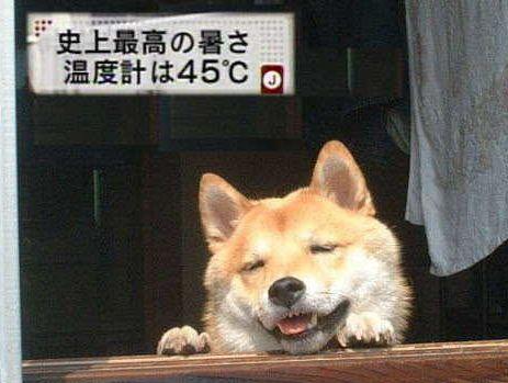 暑さを嘆くトピ(;´д`)