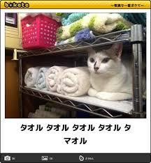 1日に何枚バスタオル洗う?
