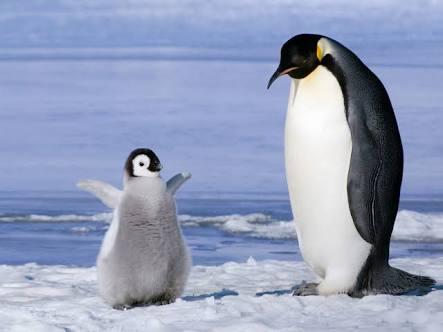 いろんな動物の赤ちゃんがみたい