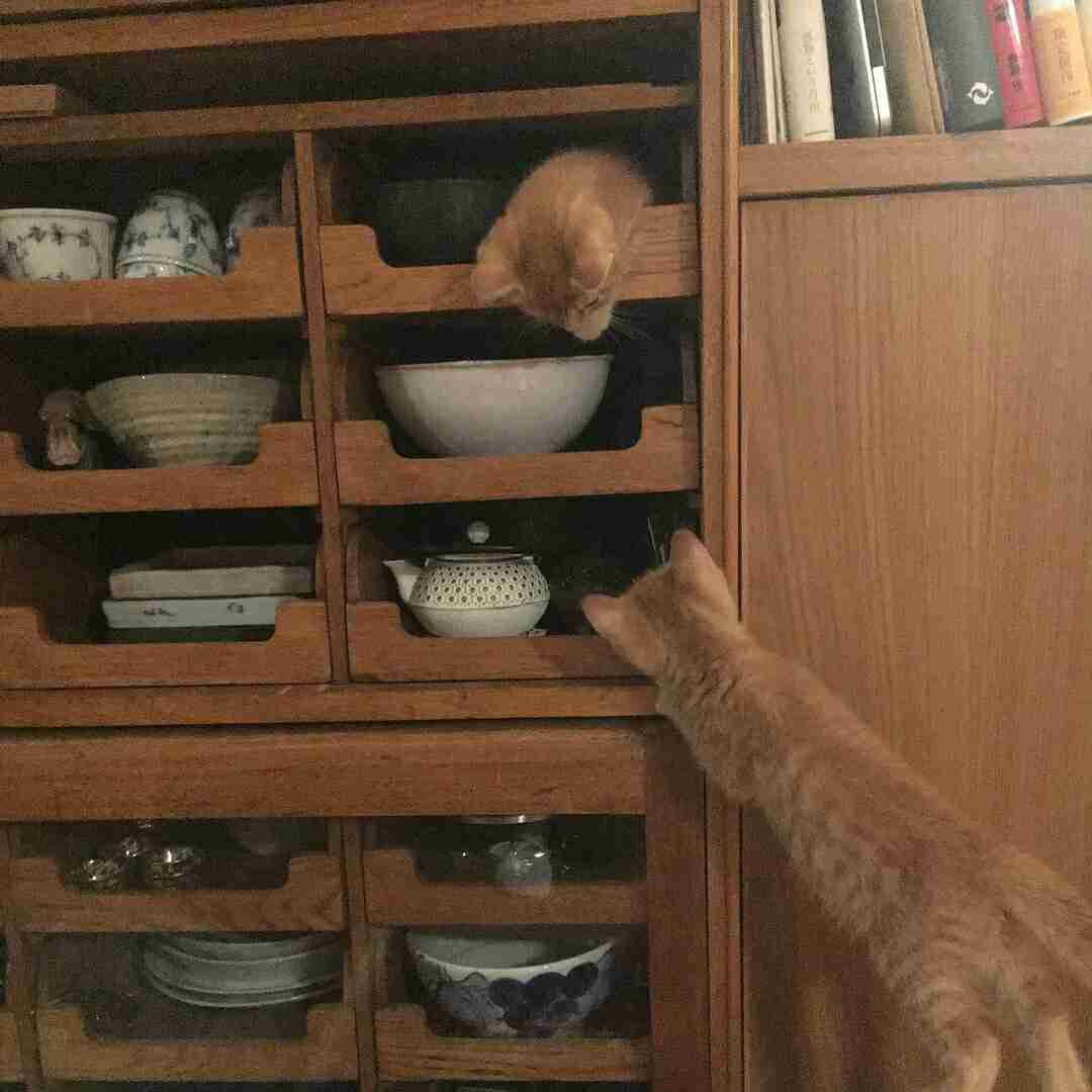 """「自分でもちょっと怖い」 石田ゆり子、はちみつ兄弟の加入で""""猫スタグラム""""が勢いを増す"""