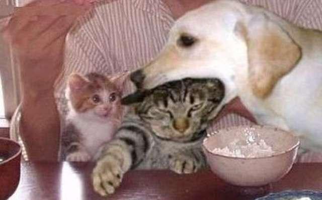 犬と猫どちらも飼ってる方いますか?
