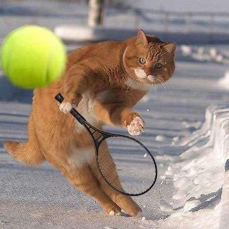 ガチでテニスしてた人〜
