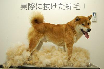 ペットの毛の生え変わり