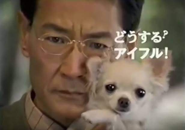 店から盗まれた子犬、無事生還 容疑者宅で飼われる