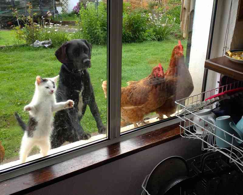 この季節の犬の外飼い