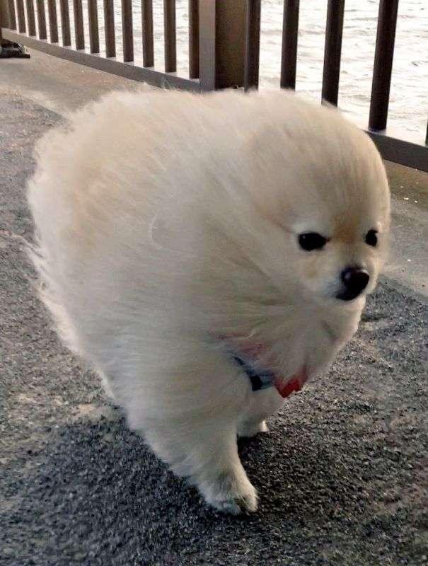 いろんな小型犬が見たい!!