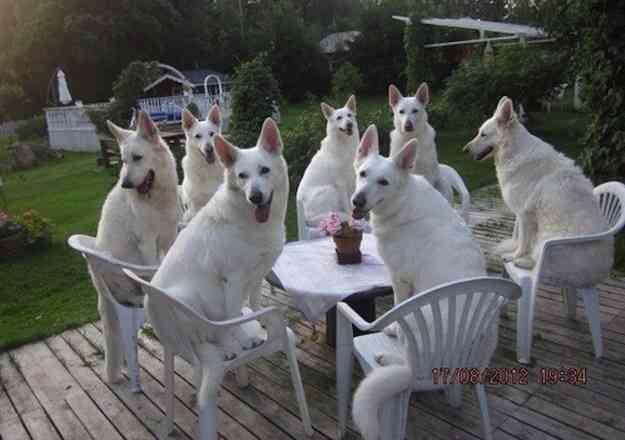 犬を多頭飼いしてる人!