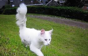 「岩合光昭の世界ネコ歩き」で好きな回