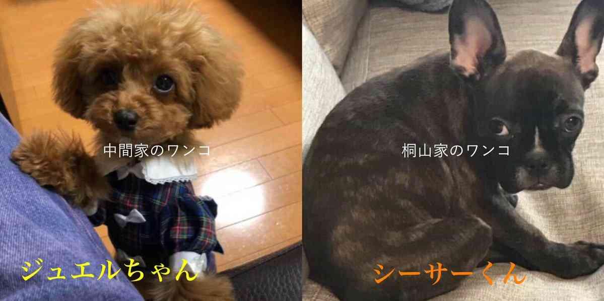 中山美穂、主演ドラマでジャニーズWEST藤井流星と濃熟ラブシーンか?