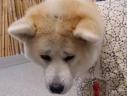 自分の生活が苦しくなってもペットは飼いたいですか?