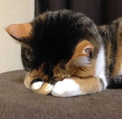 子猫が寝る姿が日本の『アレ』に激似 「もう、それにしか見えない!」