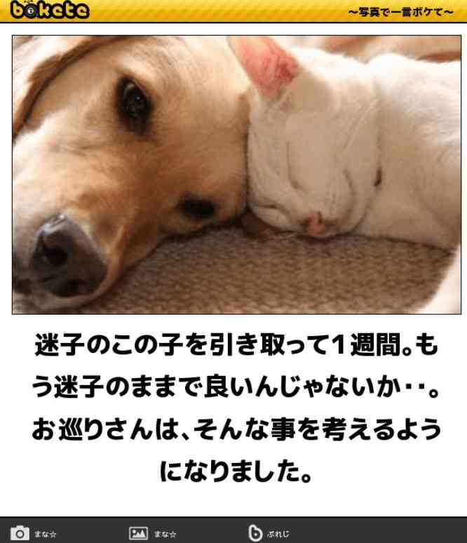 【犬好き】犬の優しさエピソード【集合】
