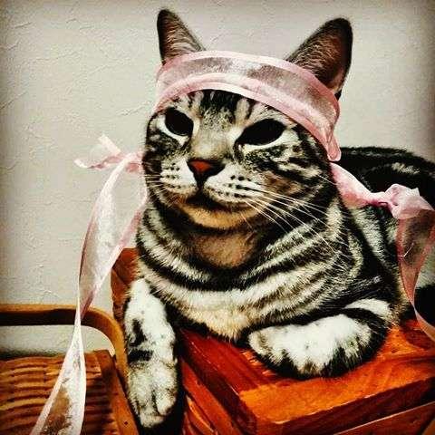 ガルちゃん猫カフェ29号店 開店しました♪ (初めての方も大歓迎!)