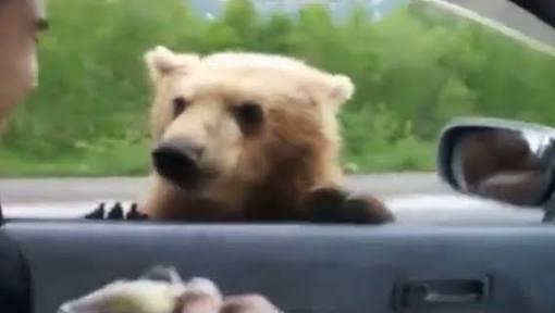 運転中に動物と出くわしたエピソード