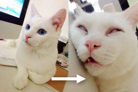 舌をしまい忘れている猫画像