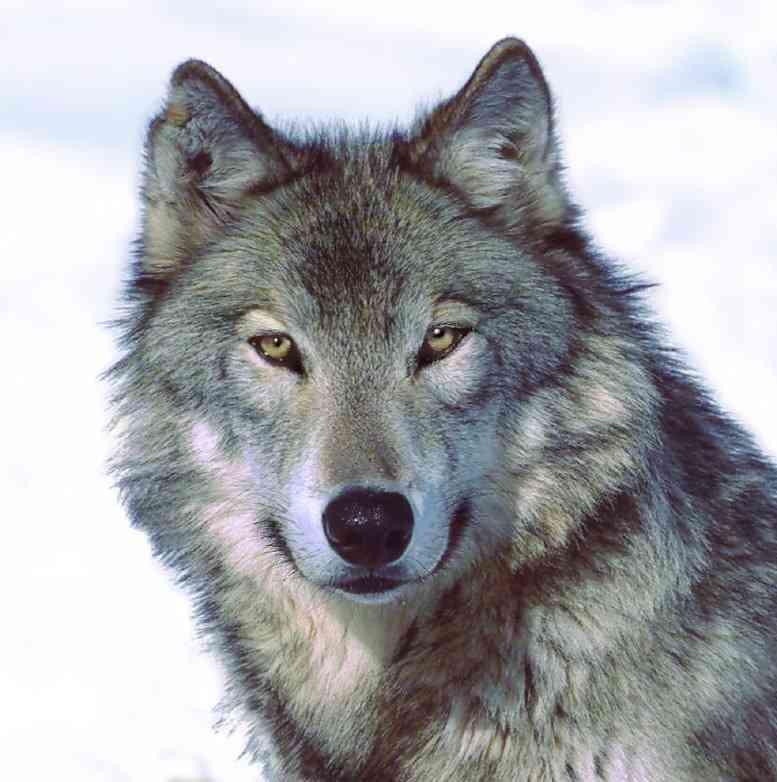 一匹狼タイプの男性に憧れる方!