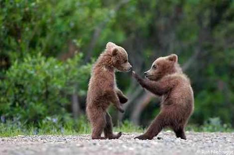 クマや害獣の射殺は賛成?