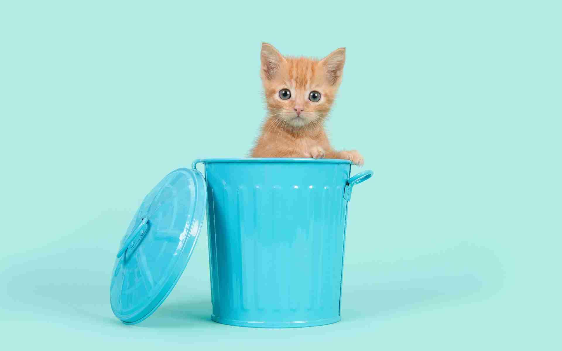 「猫の里親募集する団体にげんなり」里親希望者の深いため息 猫を自分の承認欲求満たすために利用「まともな団体あるなら教えて」
