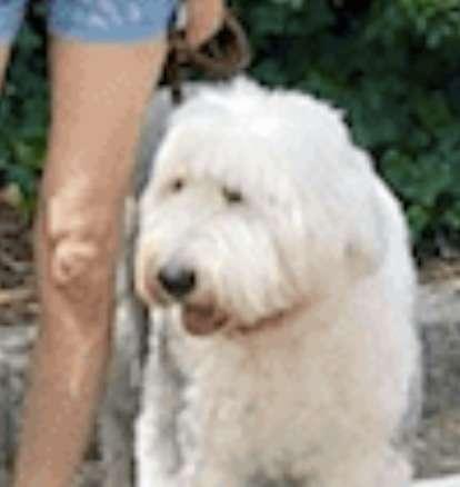 工藤静香、「それにしても脚が長い!」愛犬との早朝ウォーキング姿が大反響