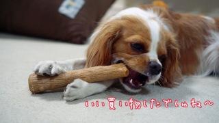 仔犬の噛み癖の治し方。