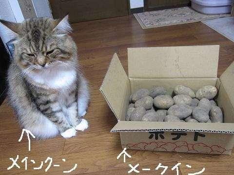 【ペット】写真下手選手権!