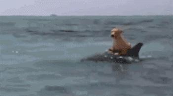 泳ぐ!画像