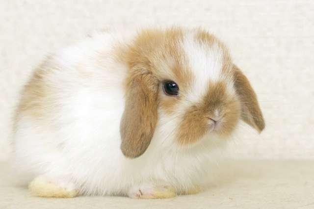 可愛いウサギさんの画像が集まるトピ