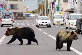 北海道でヒグマの被害相次ぐ 飼い犬が襲われ死骸を穴に埋める姿も