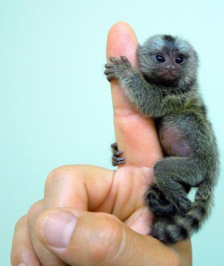 小動物を語りたい!