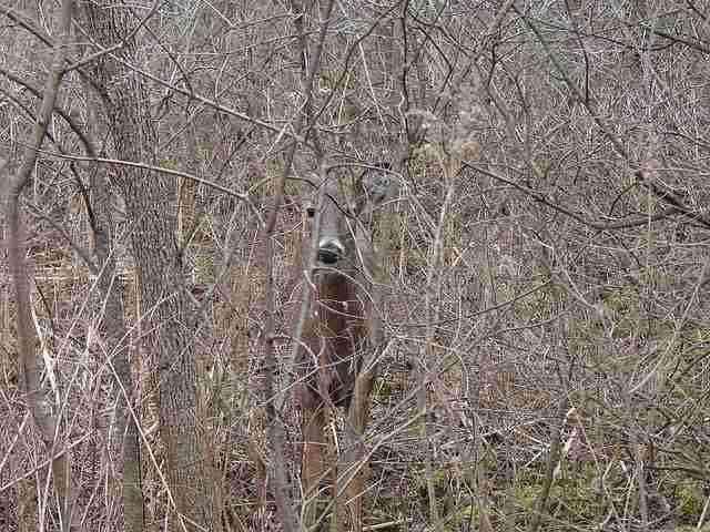 隠れている動物を探してみてはくれまいか