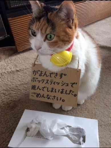動物の犯行現場写真を貼るトピ
