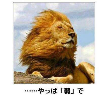風が強い画像を貼って台風を吹き飛ばすトピ