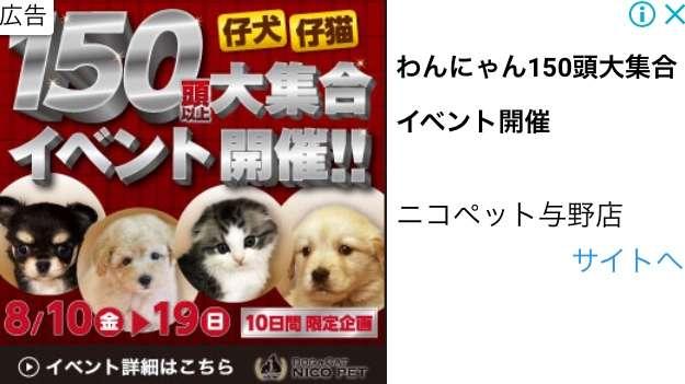 ペットの飼育、免許制導入について真剣に考えてみませんか?